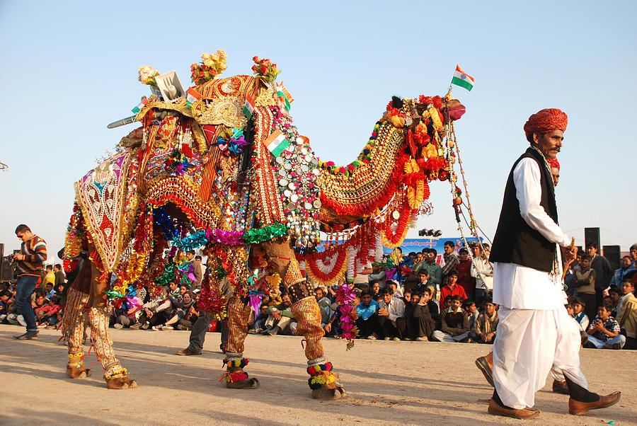 camel-festival-bikaner-is-dedicated-to-the-indispensable-ship-of-the-desert-rakesh-sharma